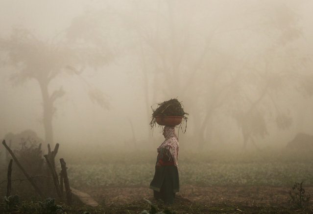 A woman carries a basket on her head through a field of vegetables on a foggy morning in Srinagar, November 20, 2019. (Photo by Danish Ismail/Reuters)