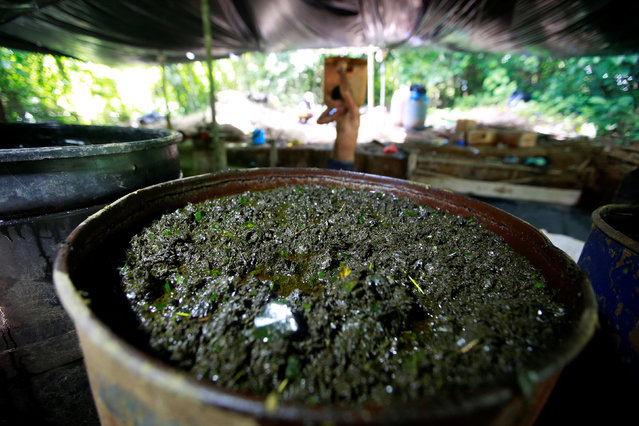 Crushed coca leaves mixed with chemicals soak in a barrel at a small farm in Guayabero, Guaviare province, Colombia, May 23, 2016. (Photo by John Vizcaino/Reuters)