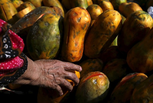 A woman holds a papaya to buy it at a vegetable market near Duri train station in Jakarta, Indonesia August 3, 2015. (Photo by Reuters/Beawiharta)