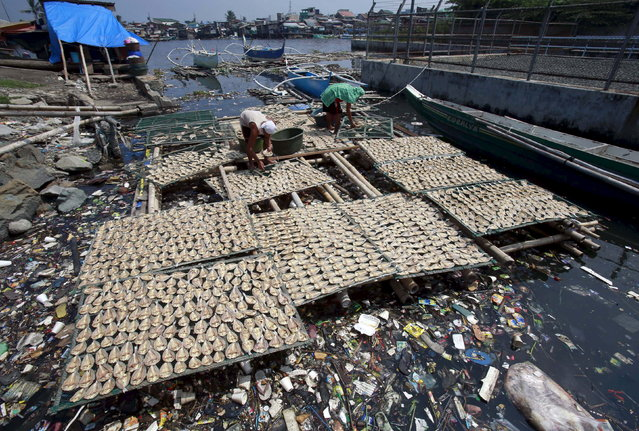 Workers collect dried fish from a plastic fish drying mesh placed over a polluted river in Navotas city, north of Manila, Philippines August 4, 2015. The dried fishes are being sold at a wet market for 150 pesos ($3.40) per kilogram. (Photo by Romeo Ranoco/Reuters)