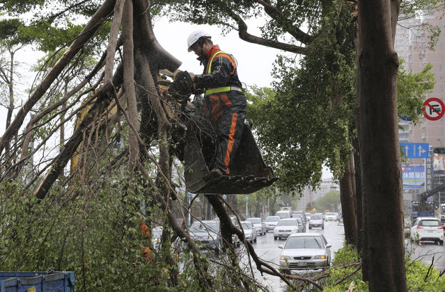 City road crews remove trees brought down by strong winds from Typhoon Soudelor in Taipei, Taiwan, Saturday, August 8, 2015. (Photo by Wally Santana/AP Photo)
