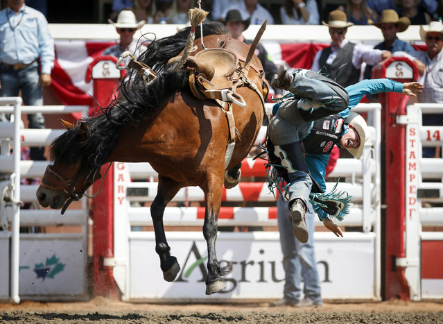 Jacobs Crawley, of Boerne, Texas, comes off Little Muffin during saddle bronc rodeo finals action at the Calgary Stampede in Calgary, Alberta, Sunday, July 16, 2017. (Photo by Jeff McIntosh/The Canadian Press via AP Photo)
