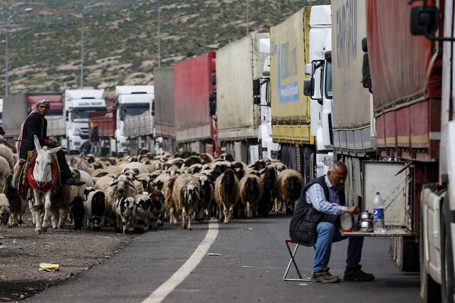 Sheep are led by a shepherd at the Cilvegozu border gate with Syria, near the town of Hatay, southeastern Turkey, Friday, February 28, 2020. (Photo by Emrah Gurel/AP Photo)