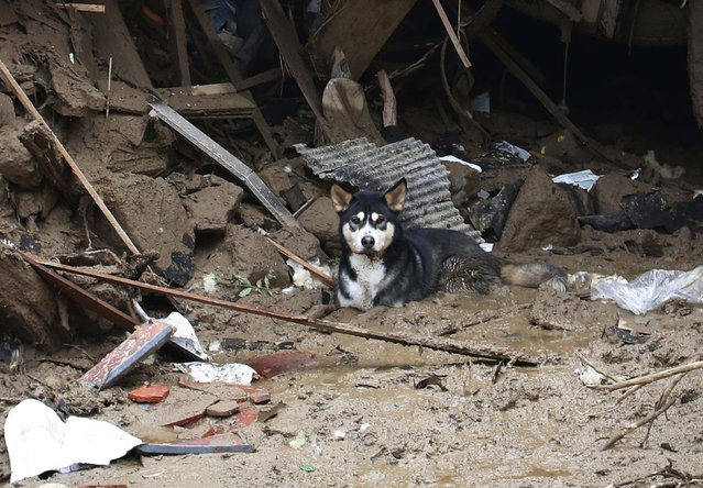 A dog takes a rest under a destroyed house at a site where a landslide swept through a residential area at Asaminami ward in Hiroshima, western Japan, August 20, 2014. (Photo by Toru Hanai/Reuters)