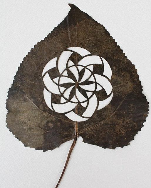 Leaf Art by Lorenzo Duran
