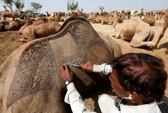 A man uses a scissors to make intricate decorative patterns on a camel's back before displaying it for sale at a makeshift cattle market ahead of the Eid al-Adha festival in Karachi, Pakistan, September 9, 2016. (Photo by Akhtar Soomro/Reuters)