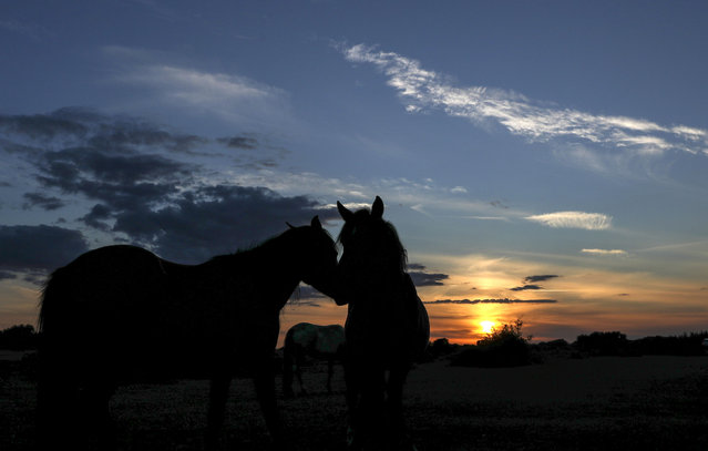 Wild horses in the New Forest, England on August 3, 2020 roam as the sun sets. (Photo by Steve Parsons/PA Images via Getty Images)