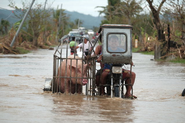 A motorcycle carrying a pig crosses a flooded road in Albay province, central Philippines due to Typhoon Vamco on Thursday, November 12, 2020. (Photo by John Michael Magdasoc/AP Photo)