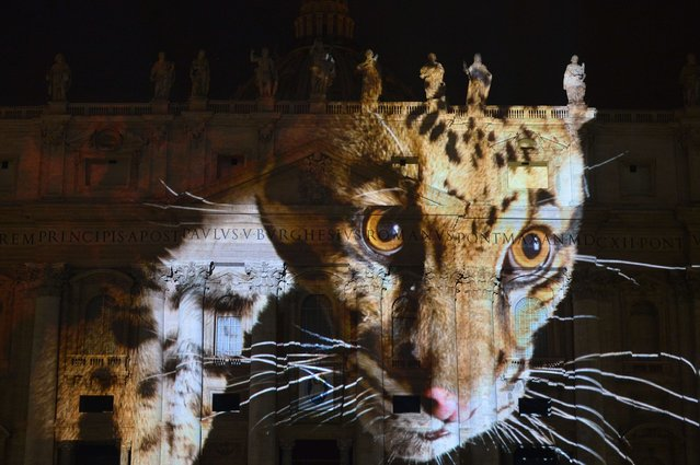 """A picture is projected on the cupola of St. Peter's Basilica during the show """"Fiat Lux : Illuminating Our Common Home,"""" on December 8, 2015 at the Vatican. Images by some of the world's greatest environmental photographers, including Sebastião Salgado, Joel Sartore, Yann Arthus-Bertrand and Louie Schwartzberg, are projected in solidarity with COP21 talks in Paris. It is also part of the inauguration of the Roman Catholic Church's yearlong Jubilee of Mercy, which starts today. (Photo by Tiziana Fabi/AFP Photo)"""