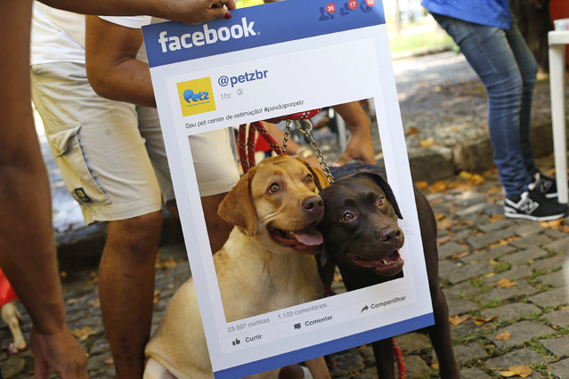 "Dogs pose for a photo in the likeness of a photo time line of Face Book during the ""Blocao"" dog carnival parade in Rio de Janeiro, Brazil, Saturday, February 14, 2015. (Photo by Silvia Izquierdo/AP Photo)"