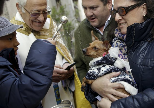 A dog reacts as it is blessed outside San Anton Church in Madrid, Spain, January 17, 2016. Hundreds of pet owners bring their animals to be blessed every year on the day of San Anton, Spain's patron saint of animals. (Photo by Andrea Comas/Reuters)