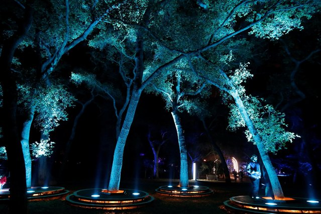"Visitors interact with ""Symphony of Oaks"" which is part of the exhibit ""Enchanted: Forest of Light"" at Descanso Gardens in La Canada Flintridge, California U.S., December 9, 2016. (Photo by Mario Anzuoni/Reuters)"