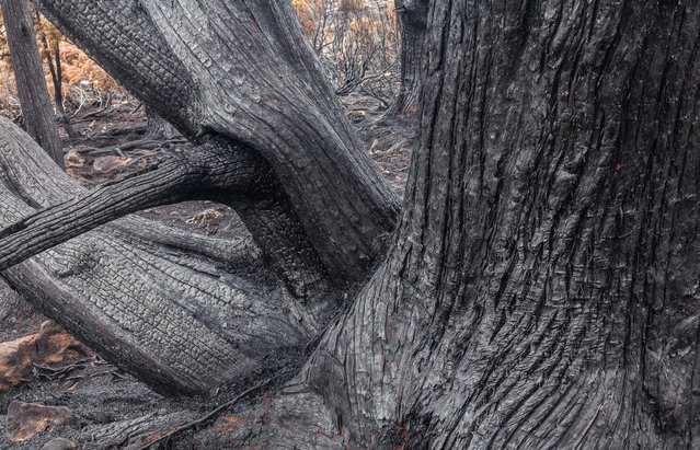 An incinerated tree trunk. (Photo by Dan Broun)