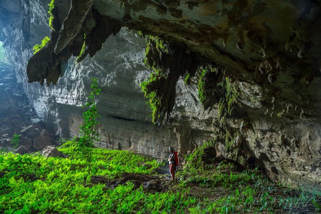 Suphaporn Singnakphum stands amongst lush low-light plants in an underground garden in a huge fossil passage that adjoins the inflow entrance of Tham Khuon Xe on March 2015 at Tham Khoun Ex, Laos. (Photo by John Spies/Barcroft Media/ABACAPress)
