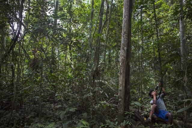 A young man sights down the barrel of his shotgun while hunting in the jungle. Hunting trips are quiet affairs with many stops to listen for game. Experienced hunters can recognize and mimic many animal sounds. (Taylor Weidman)