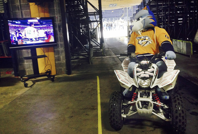 Gnash, the Nashville Predators NHL hockey mascot, stops his four wheeler as he leaves the ice Saturday, April 4, 2015, in Nashville, Tenn., to watch the final seconds of Wisconsin's win over Kentucky in an NCAA Final Four college basketball tournament semifinal game. Gnash had just finished performing after the Dallas Stars beat the Predators 4-3 in overtime. (Photo by Mark Humphrey/AP Photo)