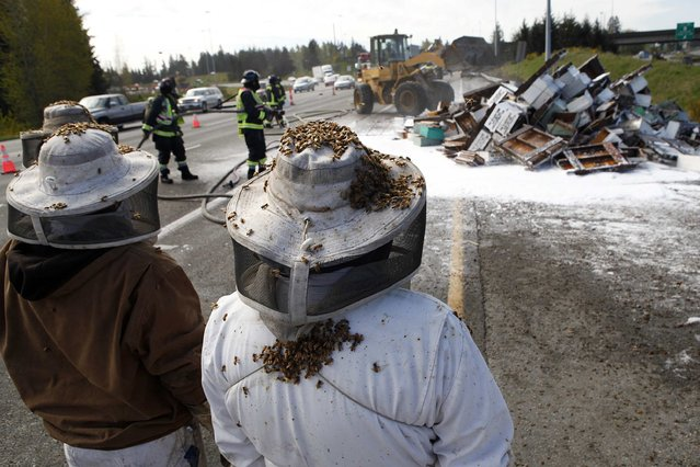 Beekeepers wait to start clearing out the scene of semi-trailer truck that overturned with a cargo of bees on a highway in Lynnwood, Washington April 17, 2015. (Photo by Ian Terry/Reuters)