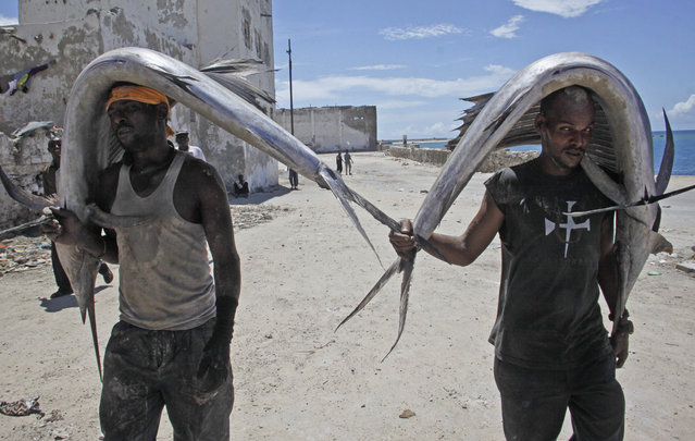 Somali men carry swordfish from the sea to a market in the capital Mogadishu, Somalia Thursday, April 23, 2015. (Photo by Farah Abdi Warsameh/AP Photo)