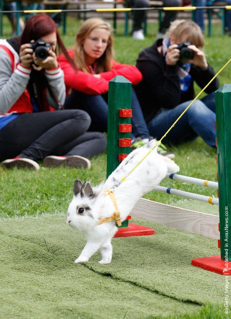 Rabbit Sport Tournament