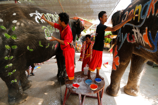 Mahouts paint elephants ahead of the celebration of the Songkran water festival in Thailand's Ayutthaya province, north of Bangkok, April 11, 2016. (Photo by Jorge Silva/Reuters)