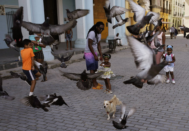 A girl and her father feed the pigeons as their dog runs amid the birds at a public square in Havana, Cuba, Wednesday, April 10, 2019. (Photo by Ramon Espinosa/AP Photo)