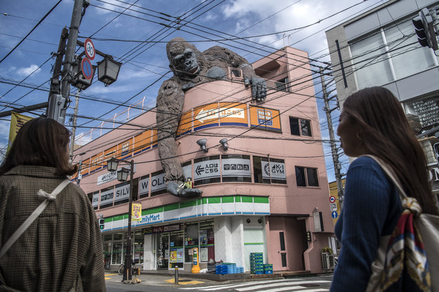 A large King Kong sculpture hangs over the side of a building, on October 24, 2018 in Tokyo, Japan. (Photo by Carl Court/Getty Images)