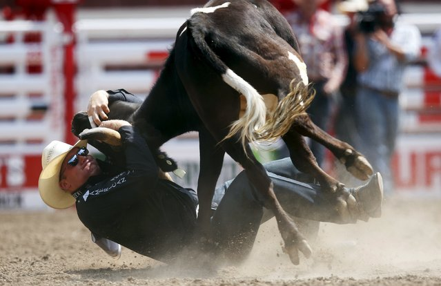 Dakota Eldridge of Elko, Nevada wrestles a steer to the ground in the steer wrestling event during the Calgary Stampede rodeo in Calgary, Alberta, July 10, 2015. (Photo by Todd Korol/Reuters)