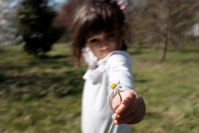 Bianca Toniolo picks a daisy as the family take a walk through the woods 200 metres from their home in San Fiorano, March 19, 2020. This was the last time the family went to the woods as restrictions got stricter throughout the country to try and contain the spread of coronavirus. (Photo by Marzio Toniolo/Reuters)