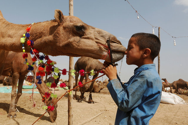 Eight-year old Baakh Mohammad plays with his family's camel for sale at a makeshift cattle market ahead of the Eid al-Adha festival in Karachi, Pakistan September 9, 2016. (Photo by Akhtar Soomro/Reuters)