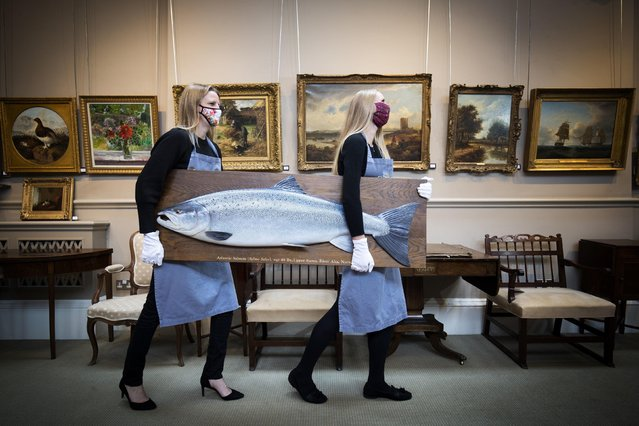 May Matthews (left) and Romy Clark from Bonhams Edinburgh carry a carved wooden model of an Atlantic Salmon by Rogers Brookes (estimate £1,500-2,000) during a photo call for the upcoming Home and Interiors sale, and Sporting and Wildlife sale, at Bonhams, Edinburgh, on September 16, 2020. (Photo by Jane Barlow/PA Images via Getty Images)