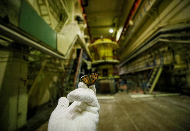 A visitor holds a butterfly that was found in a pump room of the stopped third reactor at the Chernobyl nuclear power plant in Chernobyl, Ukraine April 20, 2018. (Photo by Gleb Garanich/Reuters)