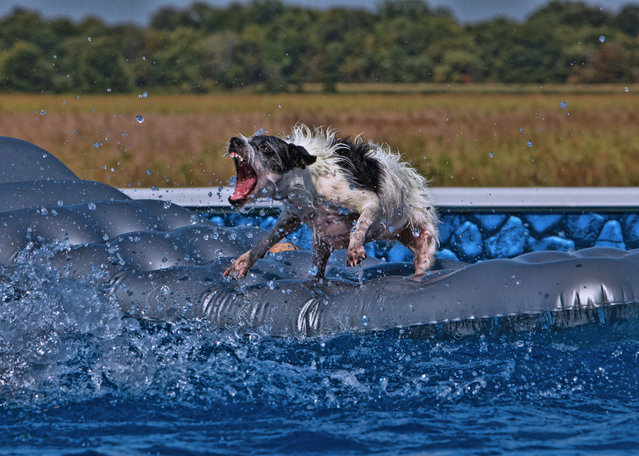 """""""Just When You Thought it Was Safe to Go in to the Water"""". (Photo by Emery Way)"""