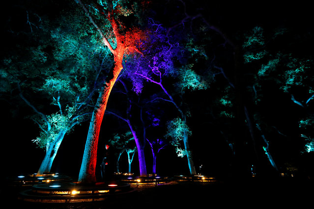 """Visitors interact with """"Symphony of Oaks"""" which is part of the exhibit """"Enchanted: Forest of Light"""" at Descanso Gardens in La Canada Flintridge, California U.S., December 9, 2016. (Photo by Mario Anzuoni/Reuters)"""