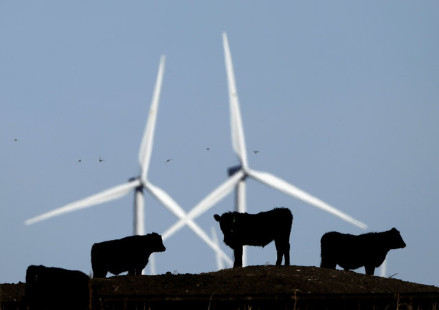 In this December 9, 2015, file photo, cattle graze in a pasture against a backdrop of wind turbines which are part of the 155-turbine Smoky Hill Wind Farm near Vesper, Kan. Dozens of European lawmakers, business executives and union leader called Tuesday for the United States to cut its greenhouse gas emissions by 50% in the coming decade compared with 2005 levels. (Photo by Charlie Riedel/AP Photo/File)