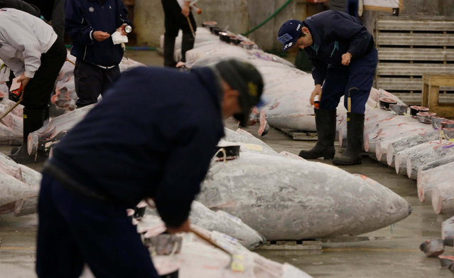 Prospective buyers inspect the quality of frozen tuna before the first auction of the year at Tsukiji fish market in Tokyo, early Thursday, January 5, 2017. (Photo by Eugene Hoshiko/AP Photo)