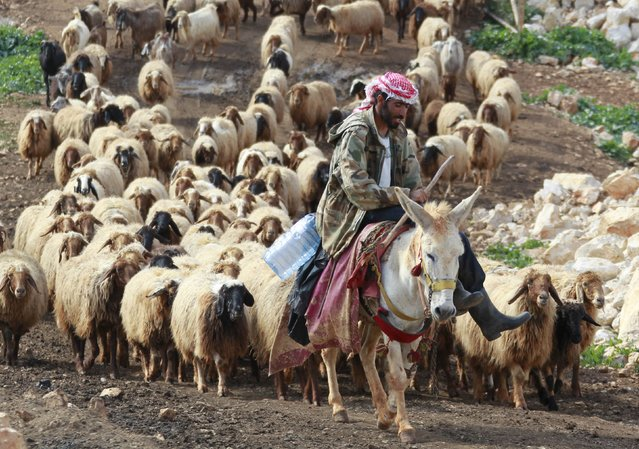 A shepherd leads a herd of sheep while riding a donkey between the villages of Meis al-Jabal and Houla in south Lebanon, March 18, 2016. (Photo by Aziz Taher/Reuters)