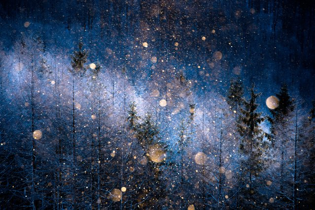 "Nature category, open shortlist. ""Diamond-dust"". A picture taken in Nagano-ken, Japan, at an altitude of about 1,700 metres. Diamond dust can be seen on only a few occasions during the cold season. (Photo and caption by Masayasu Sakuma/2017 Sony World Photography Awards)"