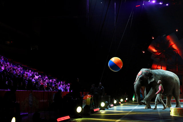 """An elephant kicks a ball toward attendees during a performance in Ringling Bros and Barnum & Bailey Circus' """"Circus Extreme"""" show at the Mohegan Sun Arena at Casey Plaza in Wilkes-Barre, Pennsylvania, U.S., April 29, 2016. (Photo by Andrew Kelly/Reuters)"""