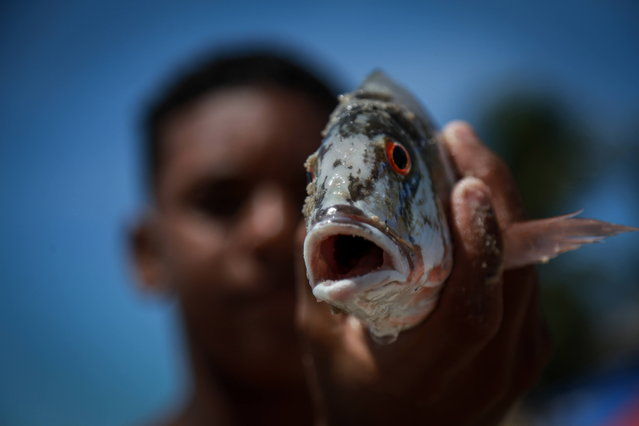 A fisherman holds a fish in Recife, Brazil, 01 November 2019 (issued 02 November 2019). According to reports, Pernambuco is one of the most affected territories by an oil spill of yet unknown origin. The oil which is believed to be coming from a ship has affected around 300 beaches on Brazil's coastline. (Photo by Diego Nigro/EPA/EFE)