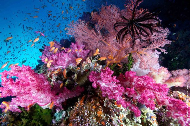 The third-place photo in the Wide Angle category is this view of soft corals and anthias fish in Fiji's Bligh Water. The picture was taken by Bill Lamp'l, a Florida-based diver and photographer