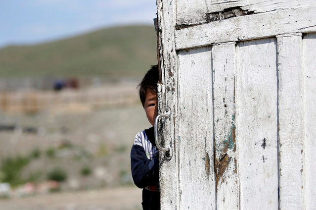 The 5-year-old son of villager Munkhtsetseg looks out behind a gate of the tent at a village on the outskirts of Ulan Bator, Mongolia, June 27, 2016. (Photo by Jason Lee/Reuters)