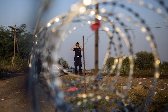 In this Tuesday, September 1, 2015, photo, a Hungarian police officer looks from his binoculars as he checks the border searching for refugees entering the country illegally next to the town of Röszke, Hungary. Over 150,000 migrants have reached Hungary this year, most coming through the southern border with Serbia. Many apply for asylum but quickly try to leave for richer EU countries. (Photo by Santi Palacios/AP Photo)