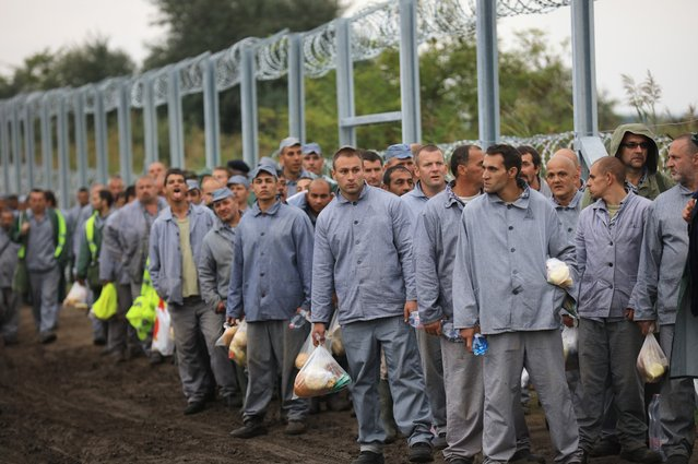 Hungarian prisoners, beleived to be a work detail, arrive at the Hungarian and Serbian border as part of a work detail to finish the razor wire border fence on September 11, 2015 in Roszke, Hungary. Migrants are rushing to the border due to fears and rumours that the borders will soon close. Since the beginning of 2015 the number of migrants using the so-called 'Balkans route' has exploded with migrants arriving in Greece from Turkey and then travelling on through Macedonia and Serbia before entering the EU via Hungary. (Photo by Christopher Furlong/Getty Images)