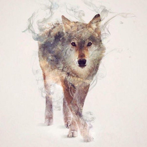 Double-Exposure Animal Portraits By Dániel Taylor