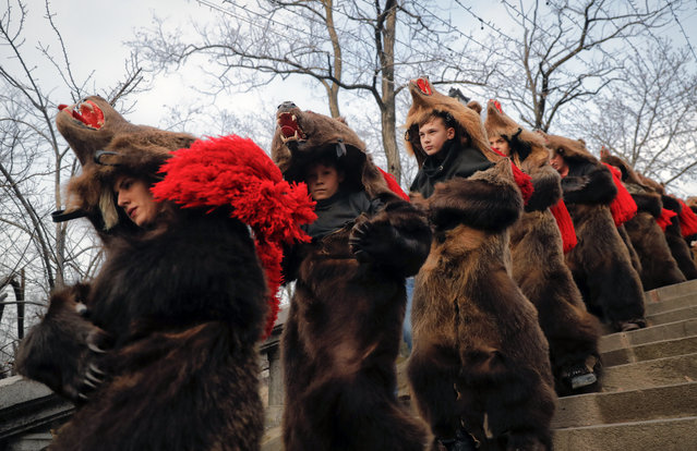 Youngsters wearing bear costumes dance during an annual ritual in Piatra Neamt, northern Romania, Thursday, December 28, 2017. The tradition, which originates in pre-Christian times when dancers wearing colored costumes or animal furs went from house to house in villages singing and dancing to ward off evil, has moved to Romania's cities, where dancers travel to perform the ritual for money. (Photo by Vadim Ghirda/AP Photo)