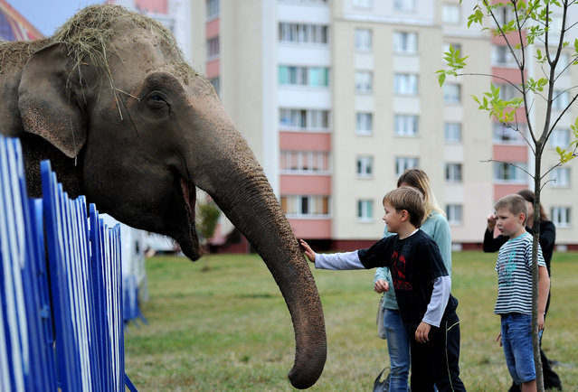 Children pat an elephant at the mobile Diva circus in the town of Molodechno, some 70 kilometers northwest of Minsk on September 3, 2015. (Photo by Sergei Gapon/AFP Photo)
