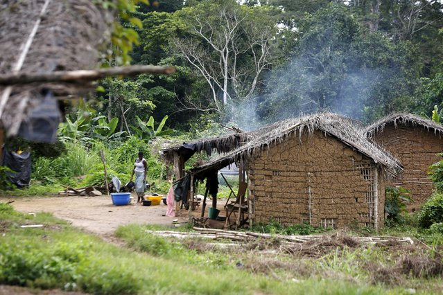 A woman stands in a village built inside the protected Gouin-Debe forest in Blolequin department, western Ivory Coast August 17, 2015. Picture taken August 17, 2015. (Photo by Luc Gnago/Reuters)