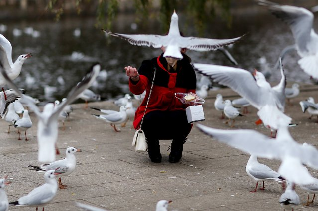 A person feeds pigeons at a park in Kunming, Yunnan province, December 16, 2014. Picture taken December 16, 2014. (Photo by Wong Campion/Reuters)