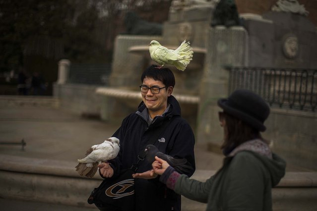 A tourist, left, grimaces as a street entertainer places her doves on him for his friend to photograph, in Madrid, Spain, Friday, January 2, 2015. (Photo by Andres Kudacki/AP Photo)