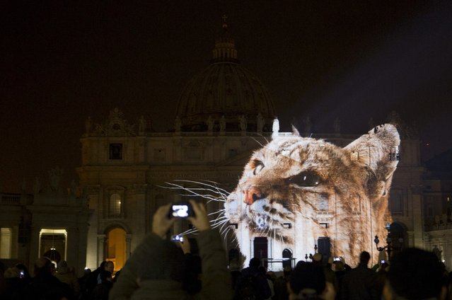 People gather to watch images projected on the facade of St. Peter's Basilica, at the Vatican, Tuesday, December 8, 2015. The Vatican is lending itself to environmentalism with a special public art installation timed to coincide with the final stretch of climate negotiations in Paris. On Tuesday night, the facade of St. Peter's Basilica has been turned into a massive backdrop for a photo light show about nature organized by several humanitarian organizations. Organizers offered the installation as a gift to Francis to mark his Holy Year of Mercy, which began Tuesday. (Photo by Riccardo De Luca/AP Photo)